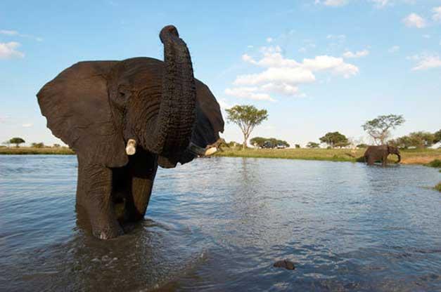 Camp Jabulani - Elephant