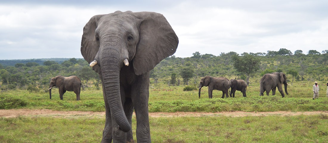Fishan the Elephant