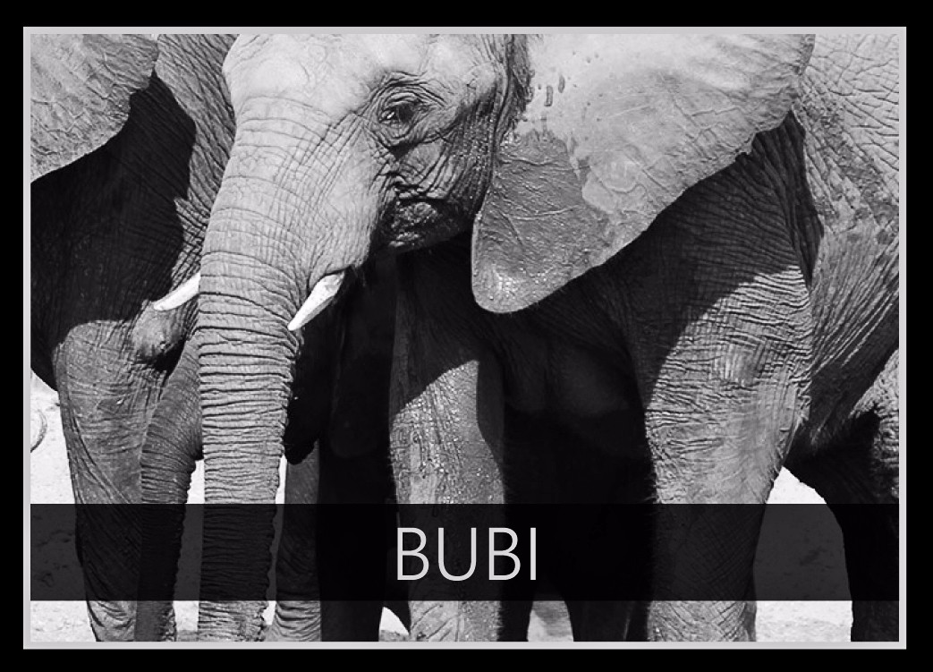 Bubi the Elephant