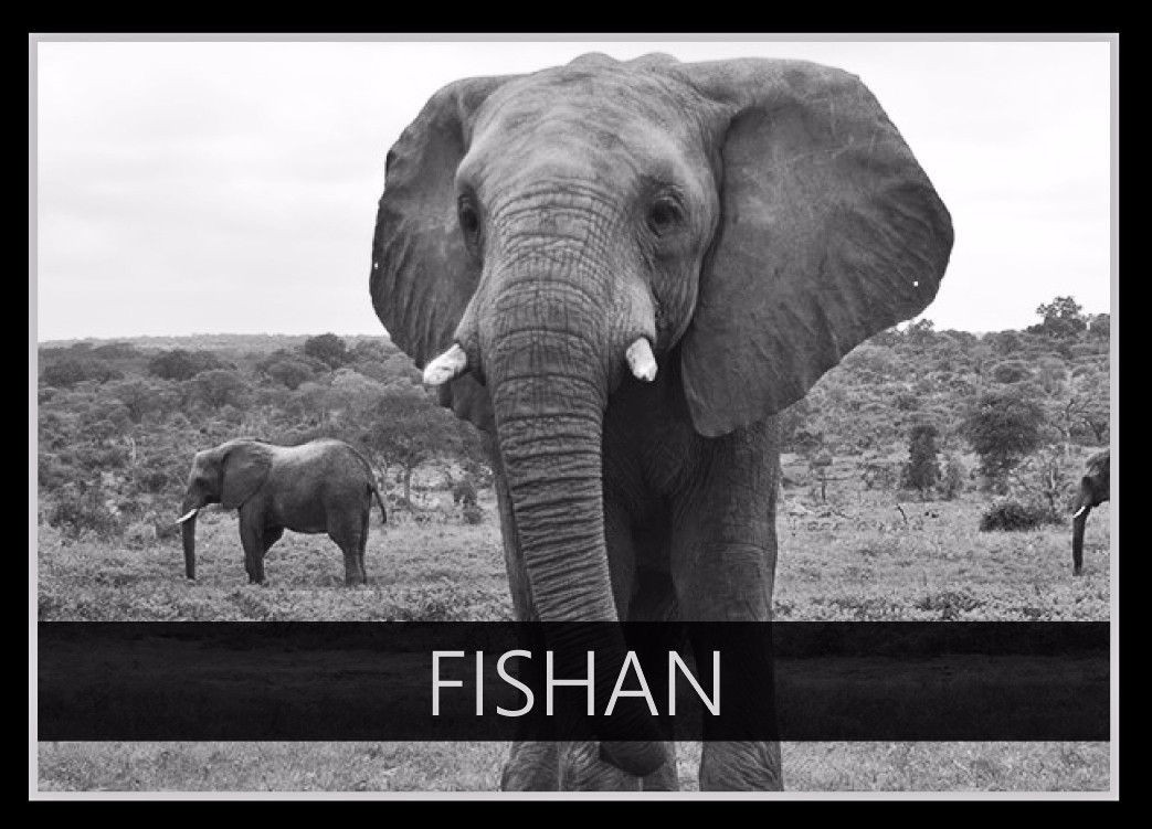 Fishan the Elephant