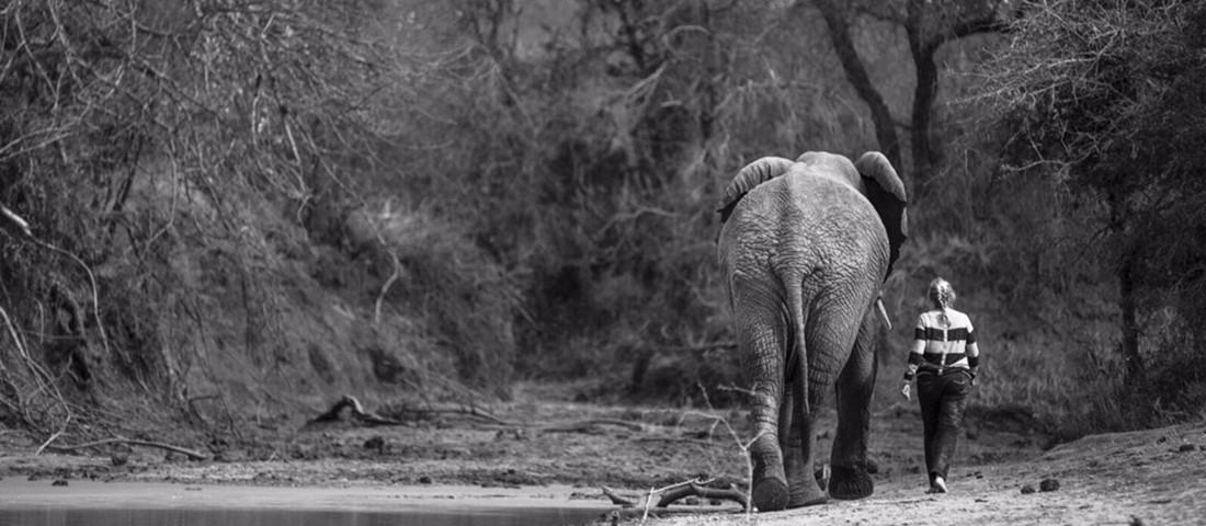 foster-an-elephant-banner