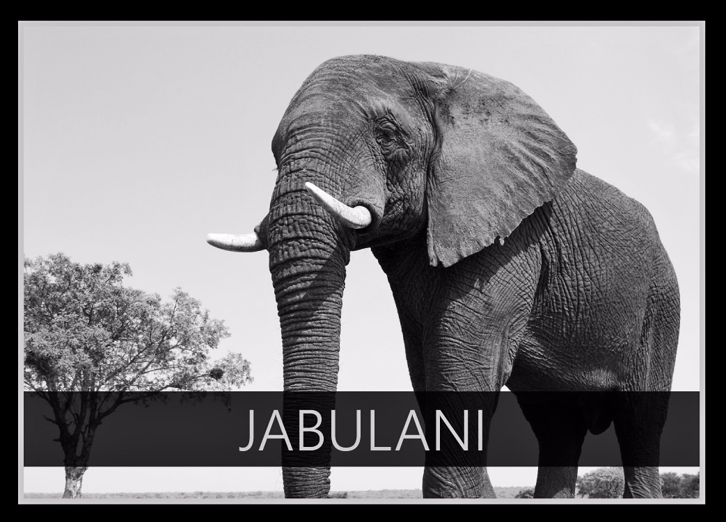 Jabulani the Elephant