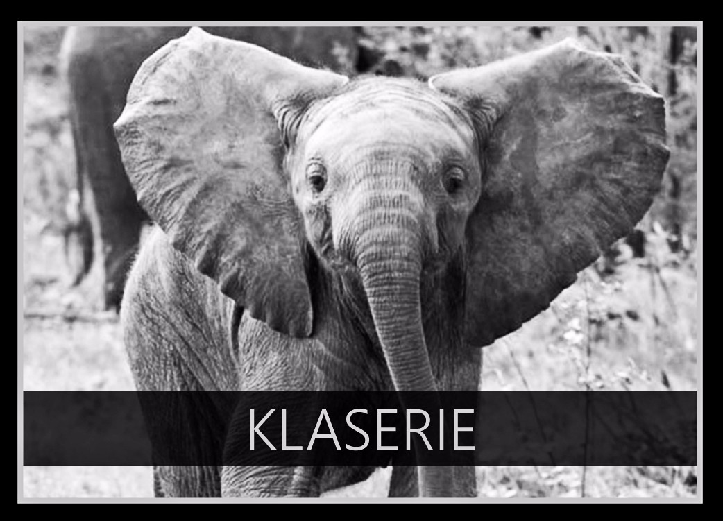 Klaserie the Elephant