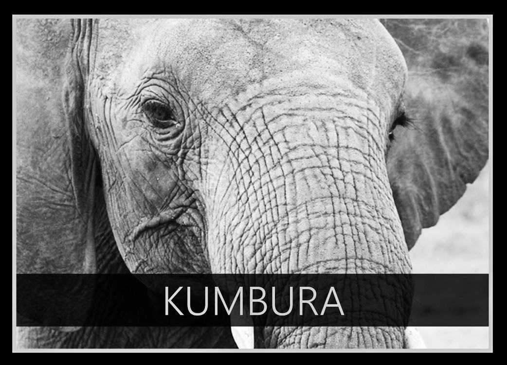 Kumbura the Elephant