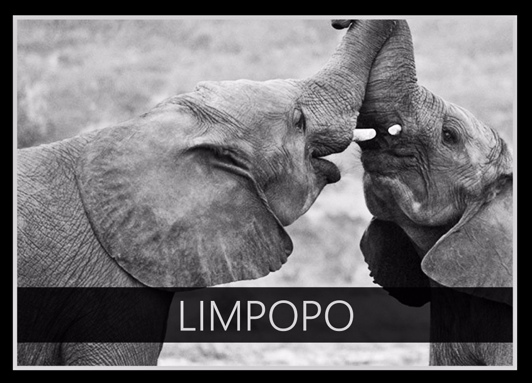 Limpopo the Elephant