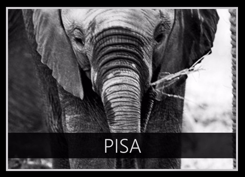 Pisa the Elephant
