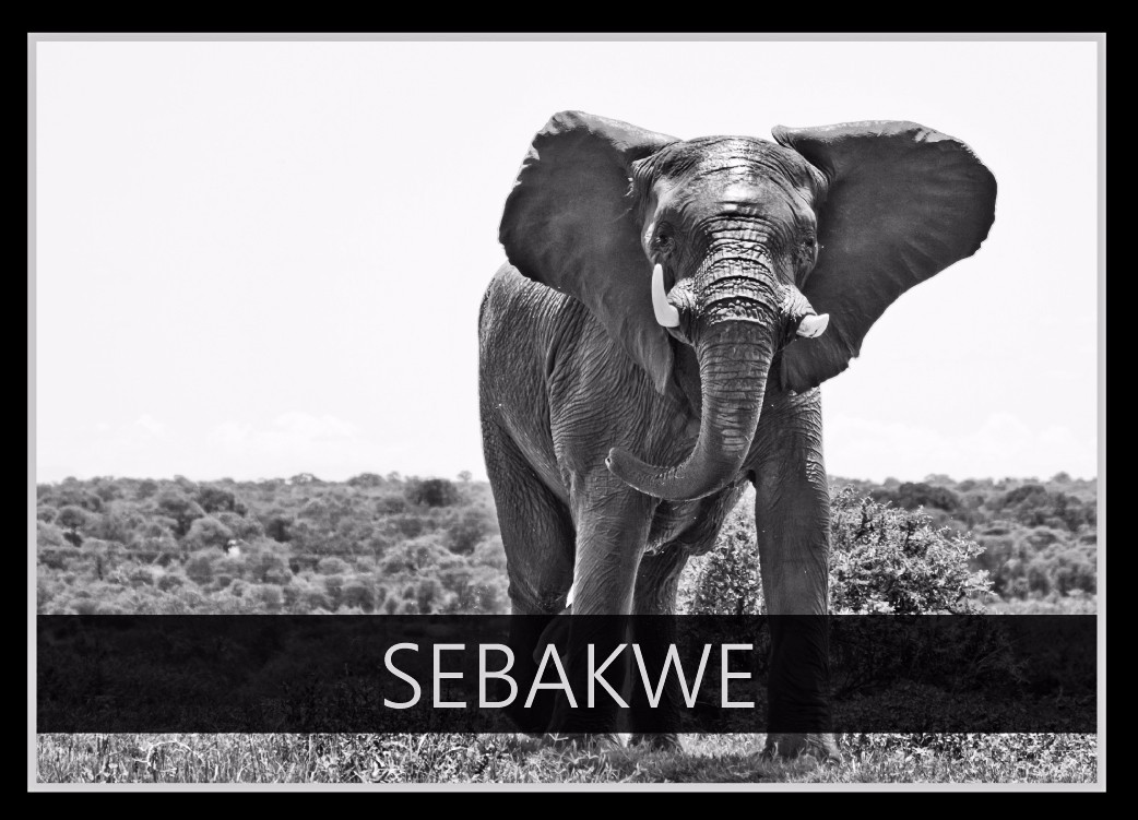 Sebakwe the Elephant
