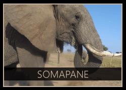 Camp-Jabulani-elephant-somapane