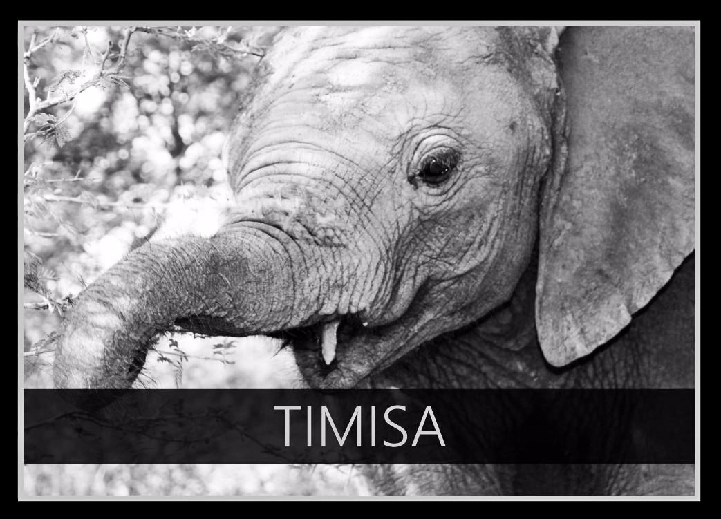 Timisa