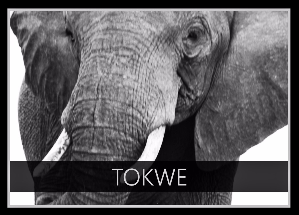 Tokwe the Elephant