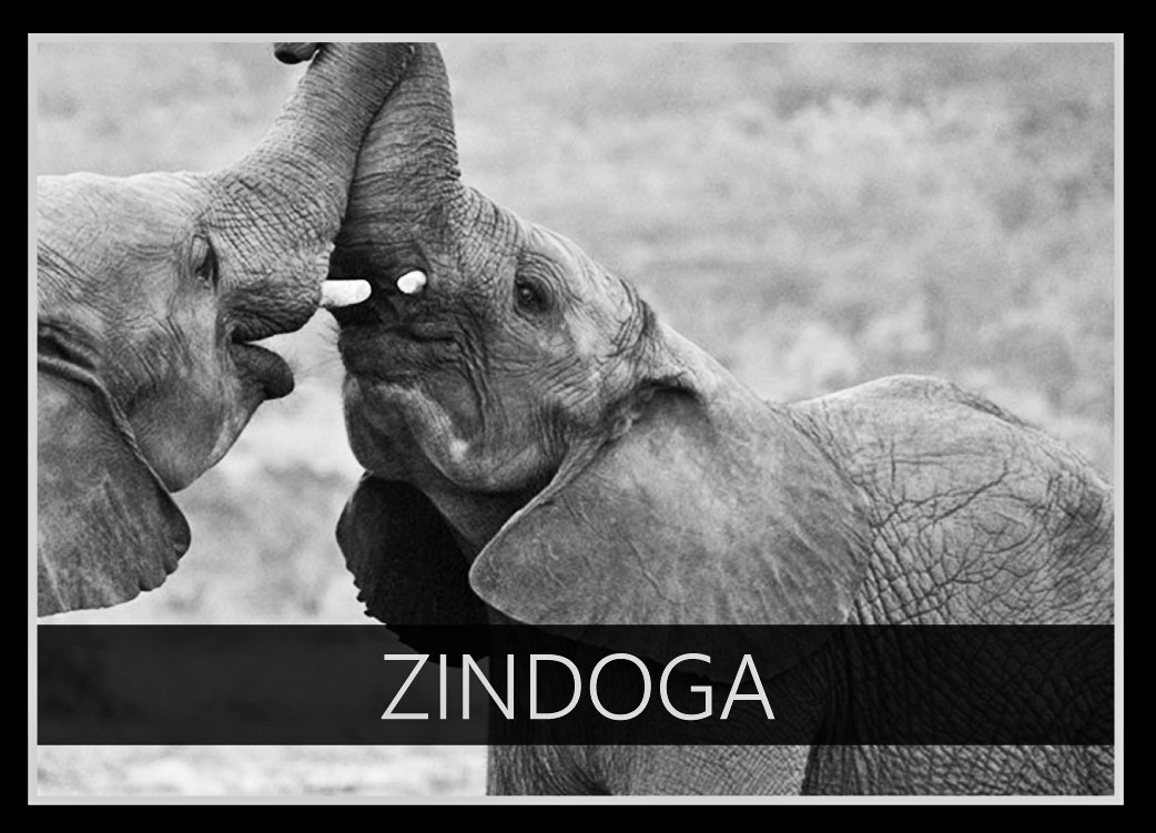 Zindoga the Elephant