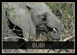 Bubi the Elephant
