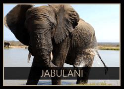 Jabulani the Elephant