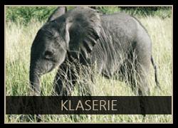 Klaserie the Elephant