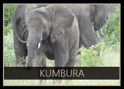 Kumbura the Elephant