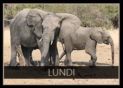 Lundi the Elephant