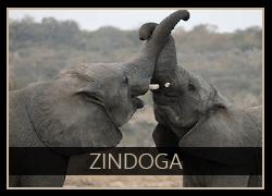 Zindoga the Elephant