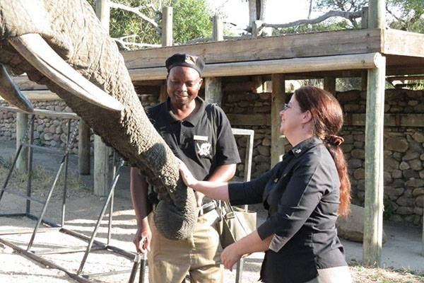 Thank you to guest Donna Evans for this beautiful picture of our manager, Kate, having a 'heart-to-heart' with Jabulani and his devoted handler Stavros.