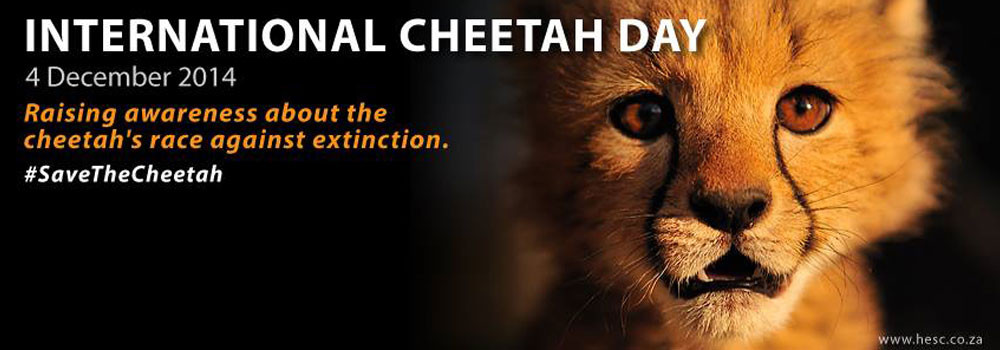 Int'l Cheetah Day at HESC