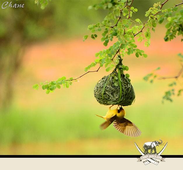 Birdlife Kapama Game Reserve