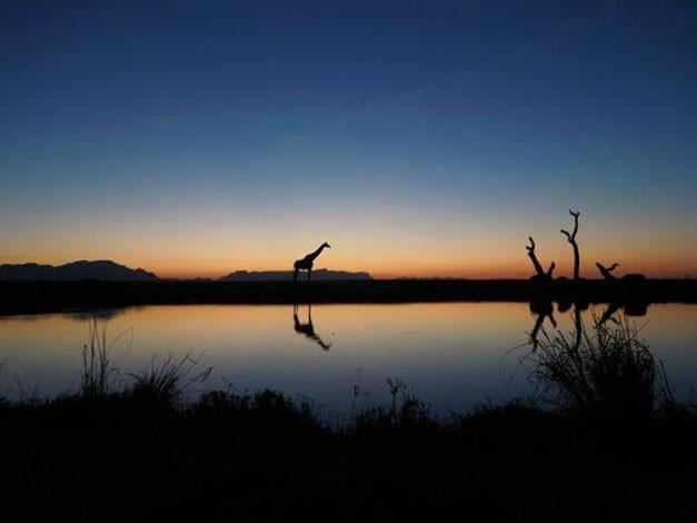 Sundowners Kapama Game Reserve