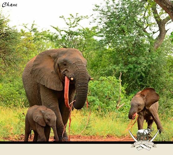 Elephants Kapama Game Reserve