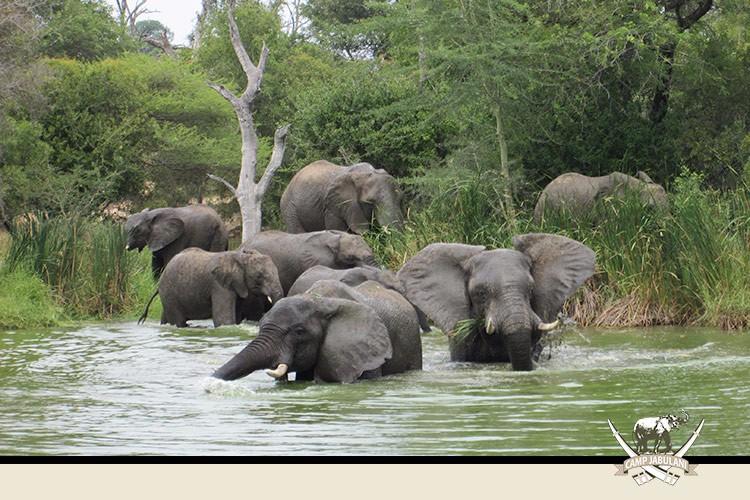 Kapama Game Reserve, Camp Jabulani, Wildlife, Elephants