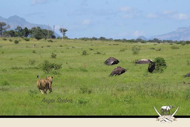 Camp Jabulani Wildlife