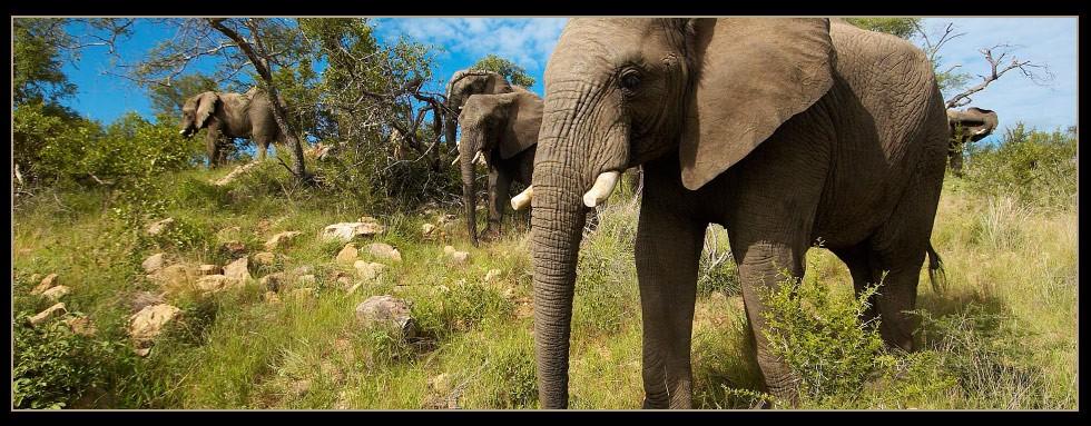 Elephant Herd at Camp Jabulani