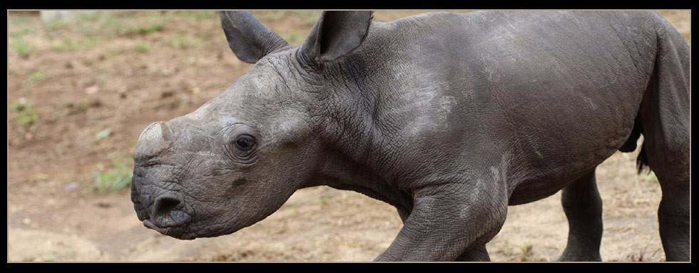 Rhino Updates
