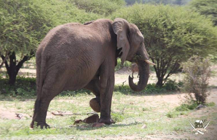 CJ_Elephants_19March16-376-copy