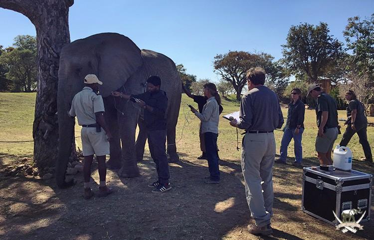 Elephant research - Camp Jabulani