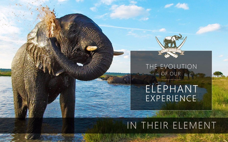 CJ-Elephant-Interaction-Blog-4