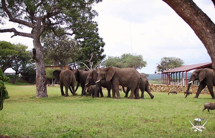 CJ-Elephant-Timisa-Blood-transfusion-6Mar17-211