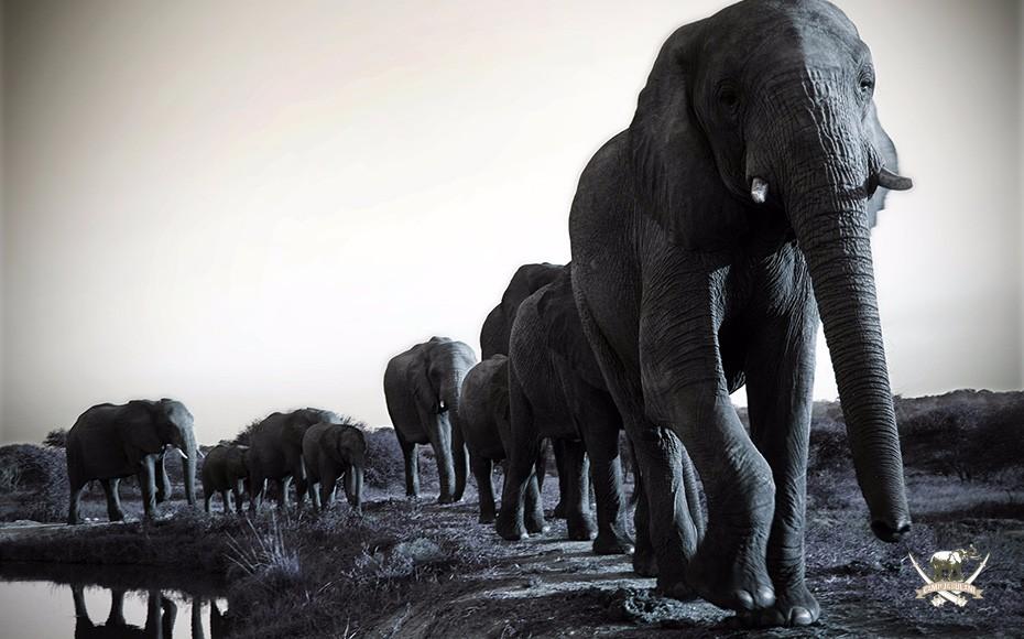 Camp-Jabulani-elephants-27