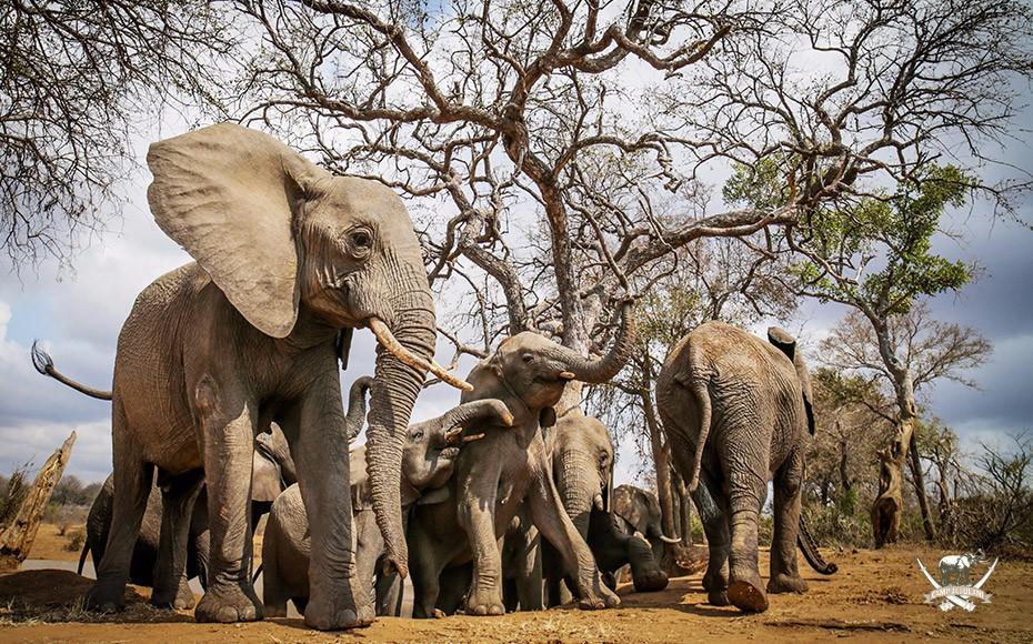 Camp-Jabulani-elephants-4