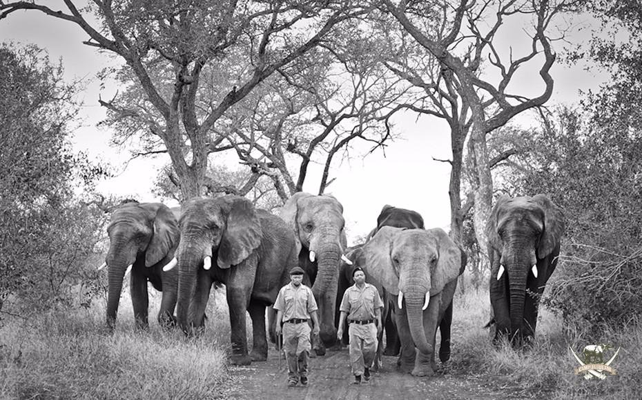 Camp-Jabulani-elephants-8