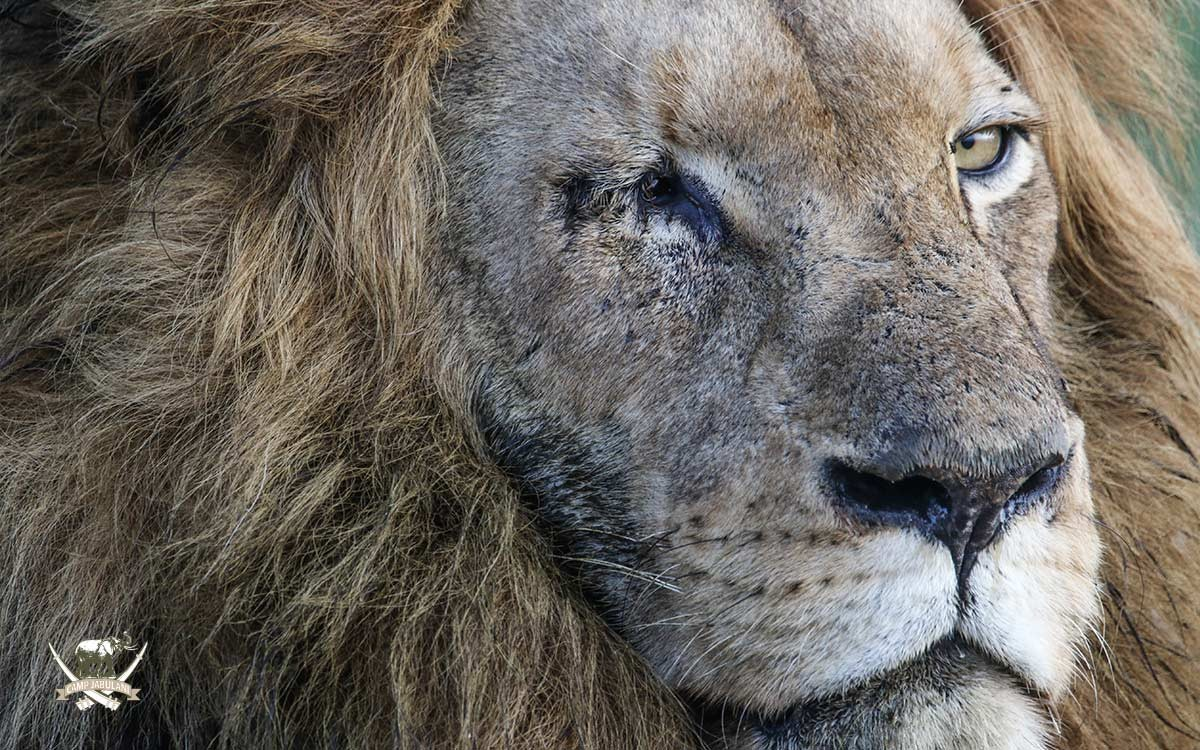 Moria-Lion
