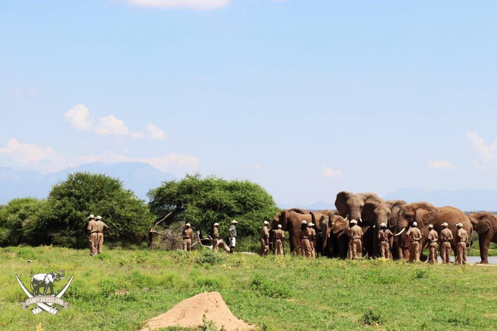 camp jabulani shawu introduced to herd