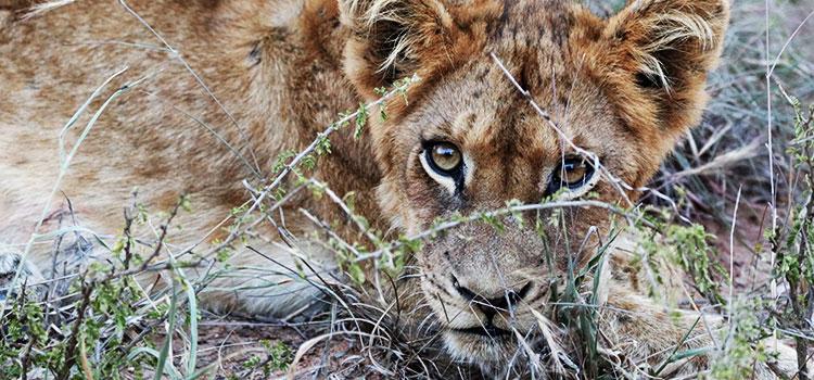 camp jabulani animal conservation