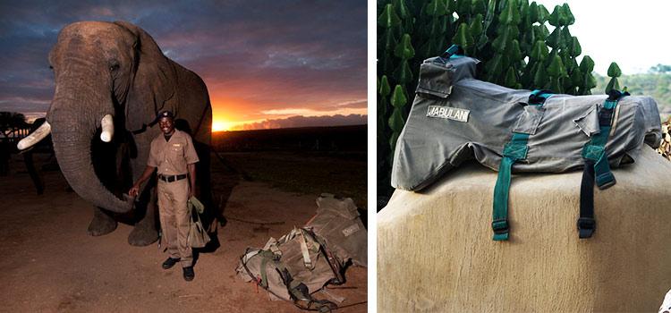 camp jabulani our decision to stop elephant safaris