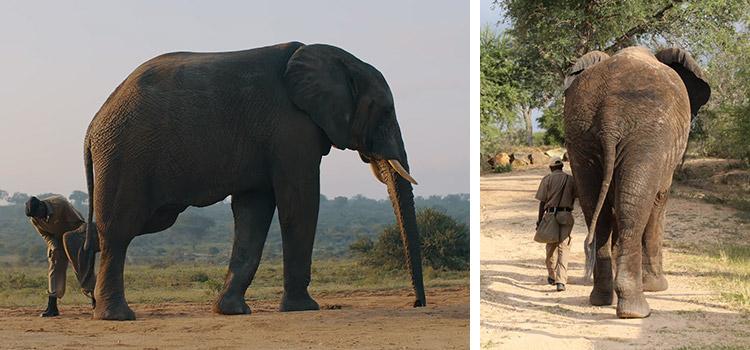 camp jabulani our model of elephant care