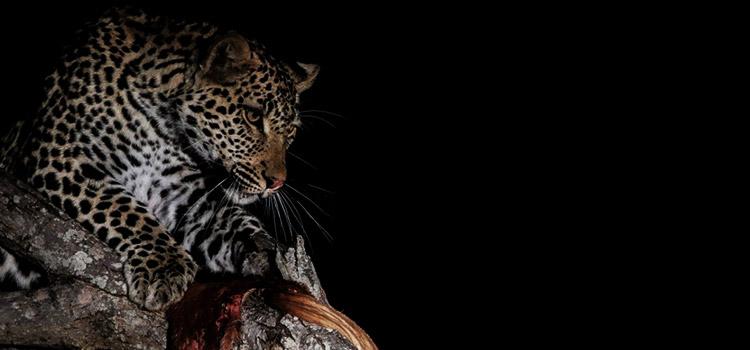 camp jabulani breathtaking wildlife