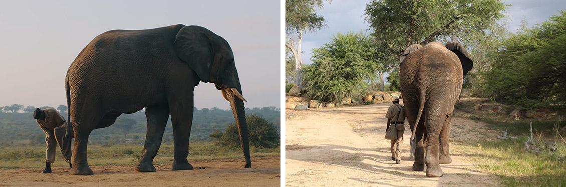 camp jjabulani our model of elephant care