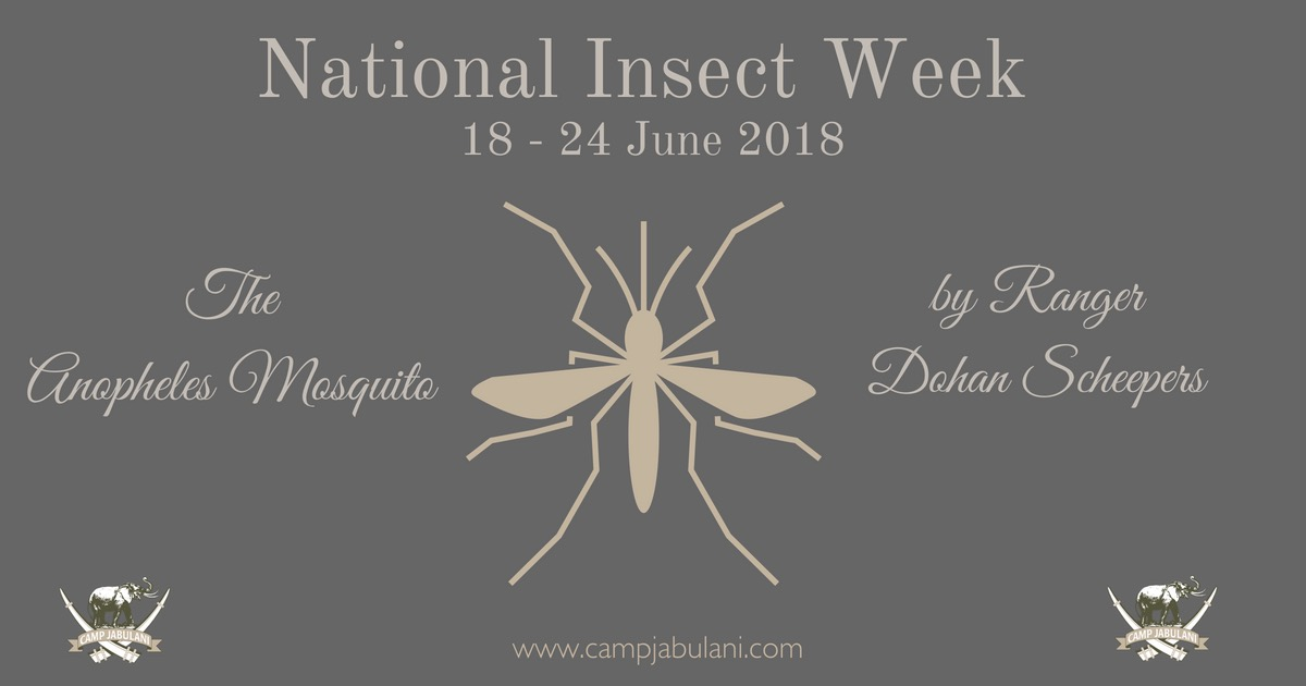 National Insect week focus on Mosquito