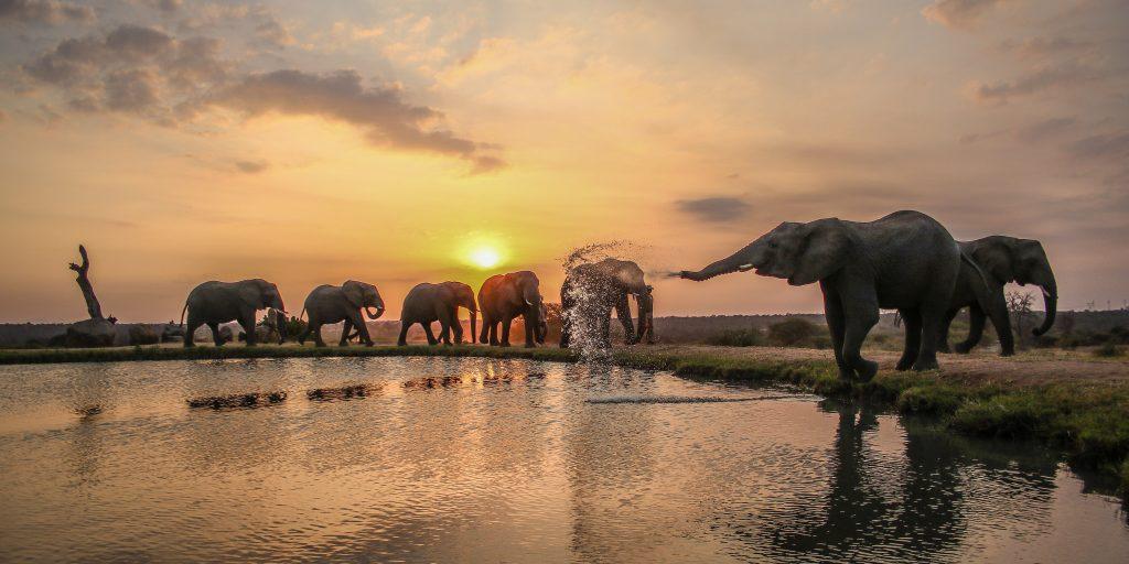 Camp Jabulani Elephants at the water hole