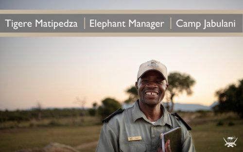 Tigere Matipedza, Elephant Manager, Camp Jabulani