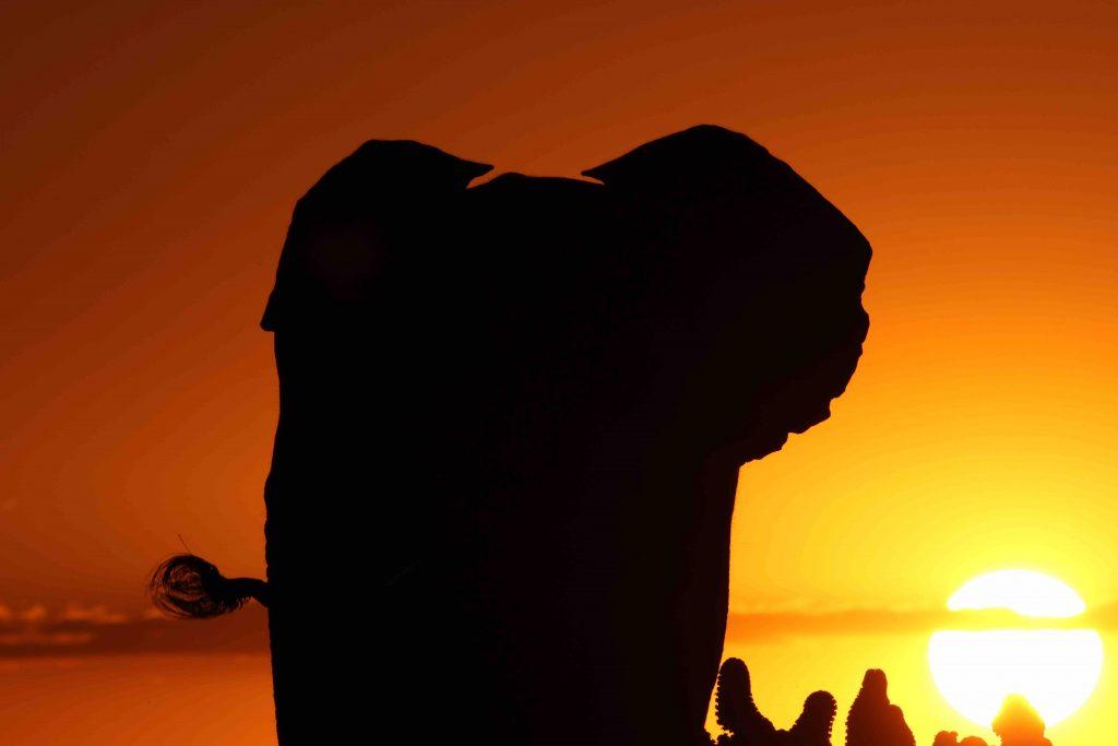 Elephant Silhouette at Sunset, Camp Jabulani