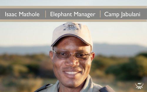 Isaac Mathole, Elephant manager at Camp Jabulani