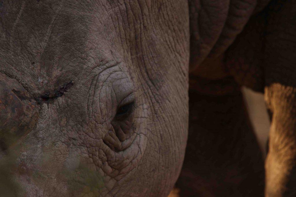 eye_of_the_rhino